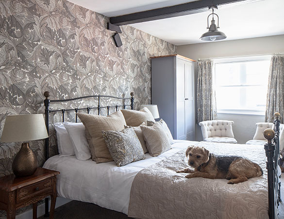 dog-friendly-stay-with-us